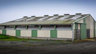 Photo of Un bâtiment ventilé pour les jeunes génisses