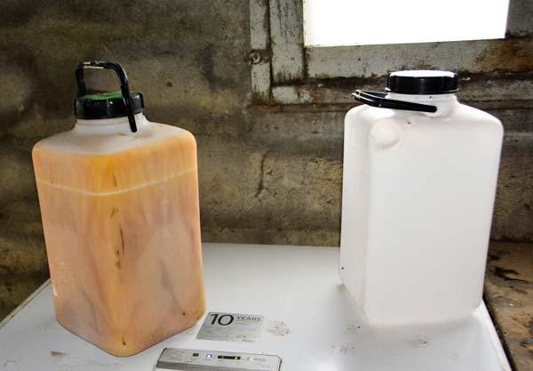 Le colostrum est congelé à la ferme en bidon de 10 L. L'éleveur le livre ensuite à la coopérative.
