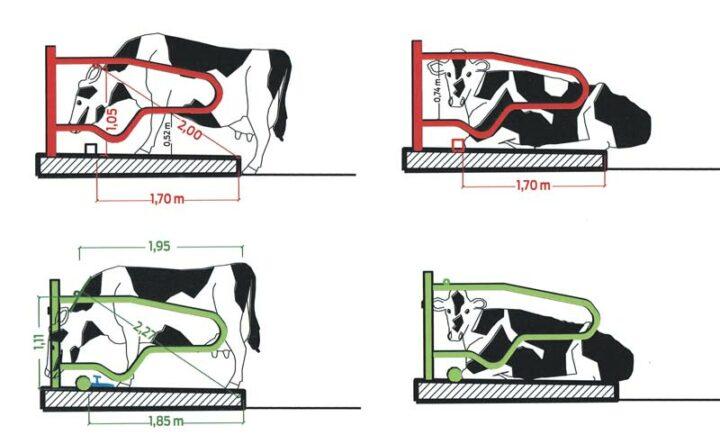 Adapter les dimensions des logettes (source Chambre d'agriculture)