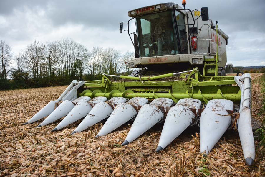 mais-grain-moissonneuse-claas