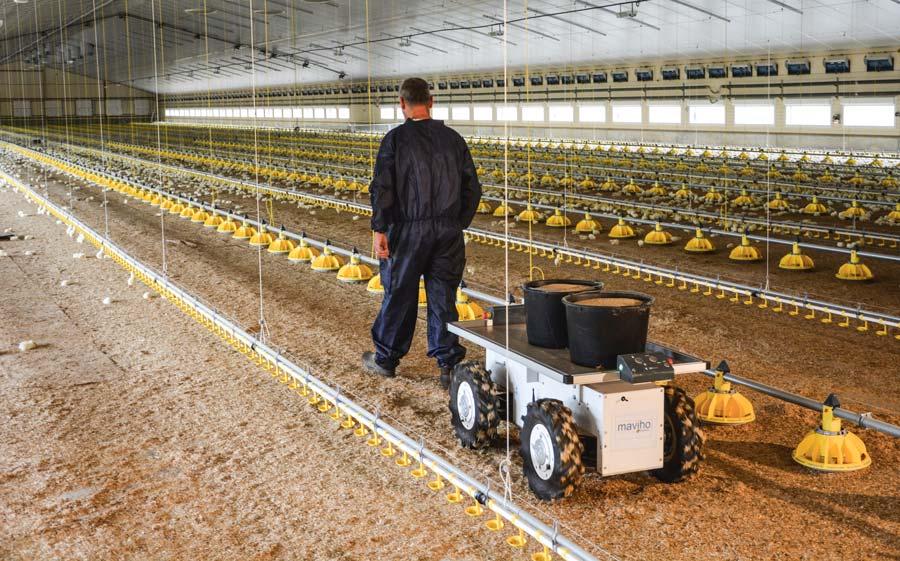 Thomas Couëpel lors du test du robot suiveur transportant ici de l'aliment dans le poulailler de 3000 m2.