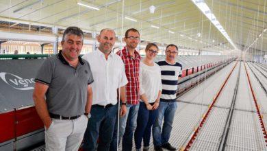 Photo of 30000 pondeuses pour diminuer la production légumière