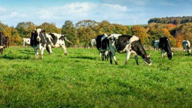 Photo of Profiterde l'herbe d'automne et préparer l'hiver