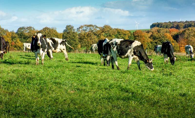 civam-rdv-herbe-paturage-lait