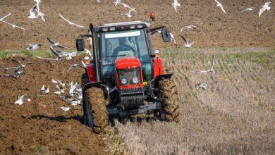 Photo of De la résistance aux herbicides en Bretagne