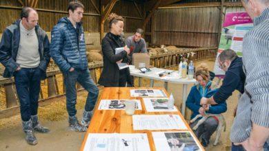 Photo of Journée régionale ovine: «L'agnelage, une étape cruciale»