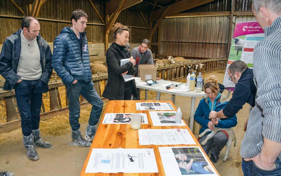 Des ateliers techniques ont permis de rappeler les gestes à maîtriser autour de la mise bas. L'occasion pour les éleveurs, comme ici Nadia Piron avec François Guillaume, vétérinaire à GDS Bretagne, d'aller de la théorie à la pratique.