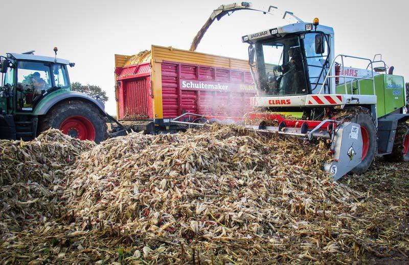 Les rafles de maïs récupérées grâce au caisson placé à l'arrière de la moissonneuse sont reprises à l'aide d'une ensileuse équipée d'un pick-up à herbe.