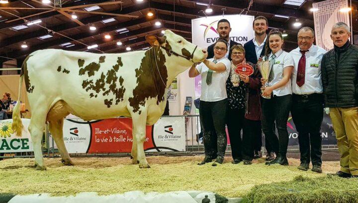 Lolistar, à l'EARL de la Villechère, Championne du concours montbéliard 2018.