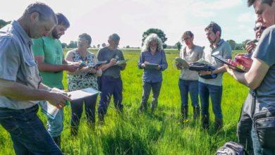 Photo of Le concours des prairies fleuries 2018 est lancé
