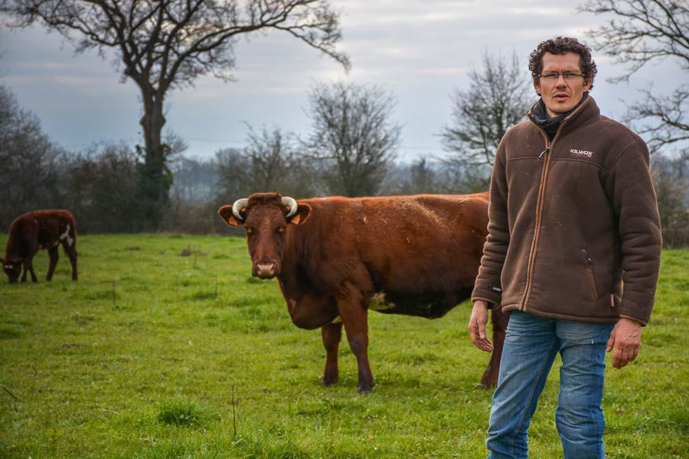 Actuellement, le troupeau de Jérémy Renaud compte 25 bovins dont 3 mères normandes et 12 mères armoricaines. «Mon objectif est de passer à une quinzaine de mères armoricaines», souligne l'éleveur.