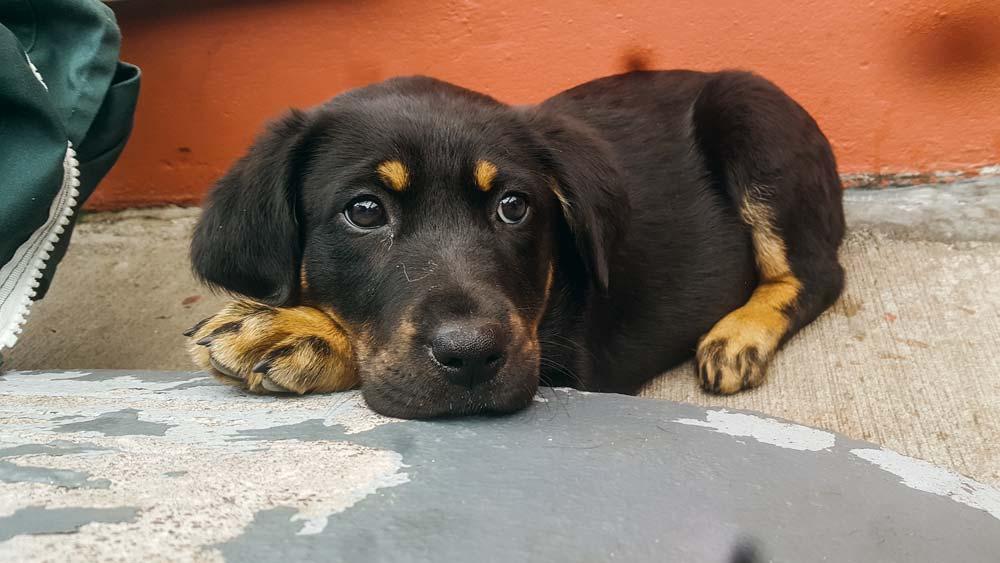 La CSPCA de Cork accueille tous types d'animaux, de la tarentule à la truie, en passant par les chiens.