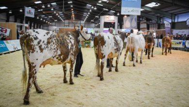 Photo of 450 animaux présents et 160 élevages en lice