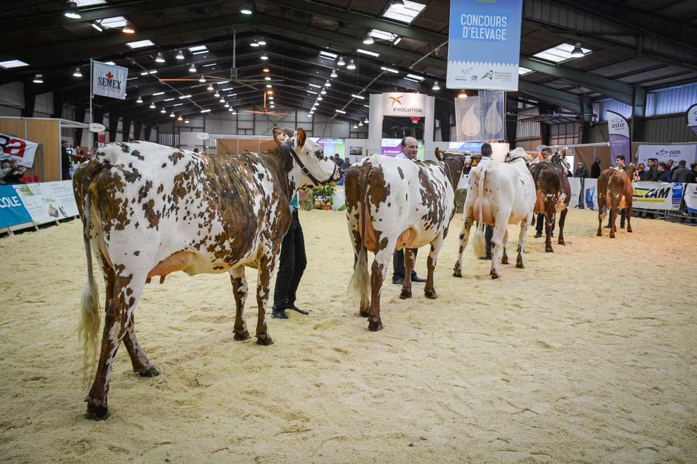 Chaque année, la participation des éleveurs est forte aux concours départementaux.