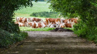 Photo of Quelle dynamique de la filière lait bio en France et à l'étranger?