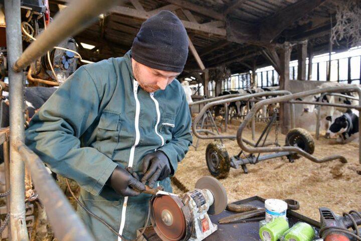 Avant de commencer à parer, Fabrice affûte sa rénette, outil tranchant qui permet de diminuer l'épaisseur des onglons, un travail qui le plus souvent se fait à la meuleuse. Pour la longueur, le pareur utilise une tenaille ou pince demi-lune (visible derrière le pot blanc).