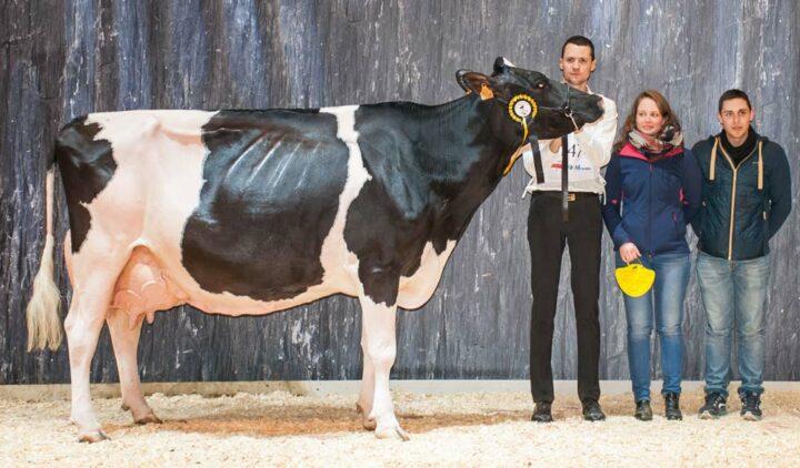 Escale, au Gaec Michard au Cambout (22), est nommée Réserve de grande championne, Championne adulte et Meilleure laitière de la race.
