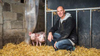 Photo of Consommation : ce porc bio qui grandit