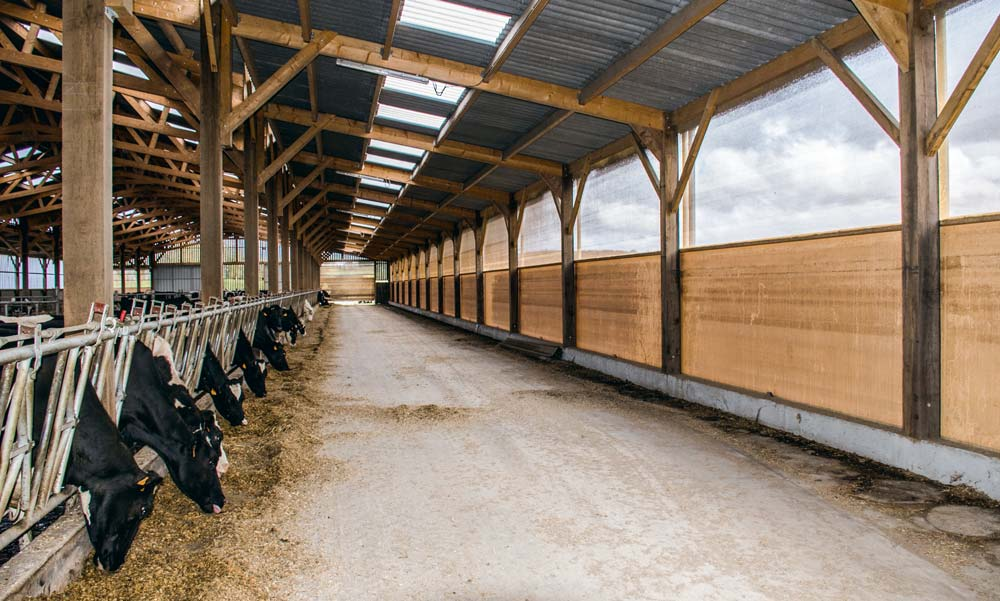 Le troupeau, logé auparavant dans un bâtiment ancien, plus sombre et moins bien ventilé, a retrouvé beaucoup de confort dans cette enceinte lumineuse et bien dimensionnée.