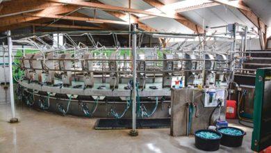Photo of Un roto 40 postes pour 200 laitières