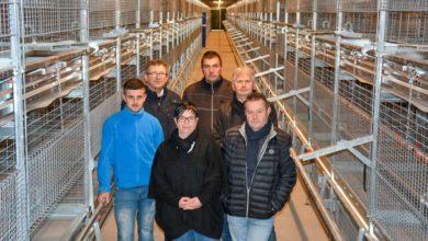 Photo of Les poulettes en volière ont pris la place des pondeuses en cages