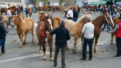 Photo of Concours régional de poulains à la Foire de Plaintel