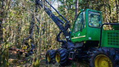 La forêt morbihannaise représente 19% du territoire, contre seulement 12 à 13 % dans les départements voisins, mais elle est très morcelée.