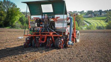 Le semoir spécifique est équipé pour semer à 80 cm d'écartement, afin de répondre à la largeur des machines de récolte, montée en 2 rangs.