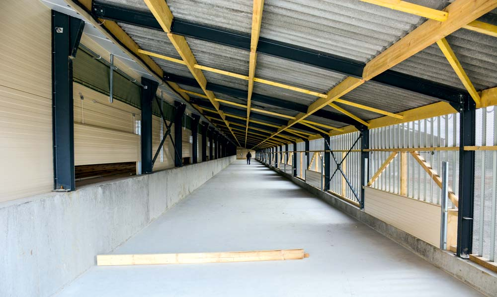Les pondeuses ont accès au jardin d'hiver situé 1 m en contrebas de la salle d'élevage.