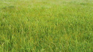 Photo of La vente d'herbe est-elle un bail rural ?