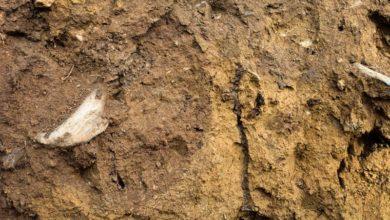 Photo of Garder les pieds sur terre avec son sol