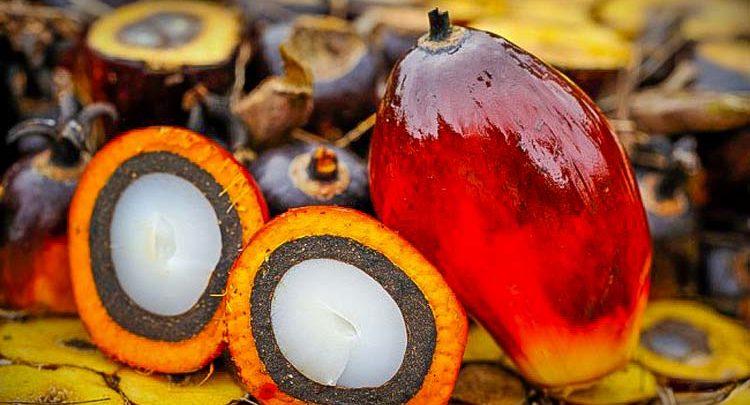 Photo of Biocarburants : les députés recourent à une seconde délibération sur l'huile de palme