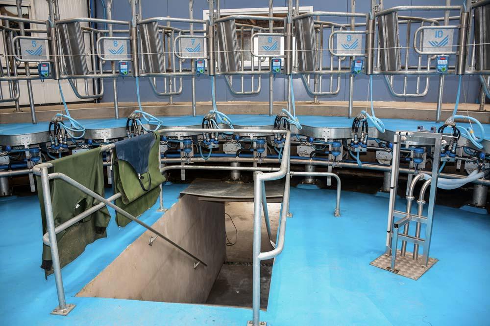 L'entrée par escaliers à l'intérieur du roto. La rotation dure 12 minutes. Les trayons sont lavés, essuyés (premiers jets tirés) puis trempés en fin de traite.