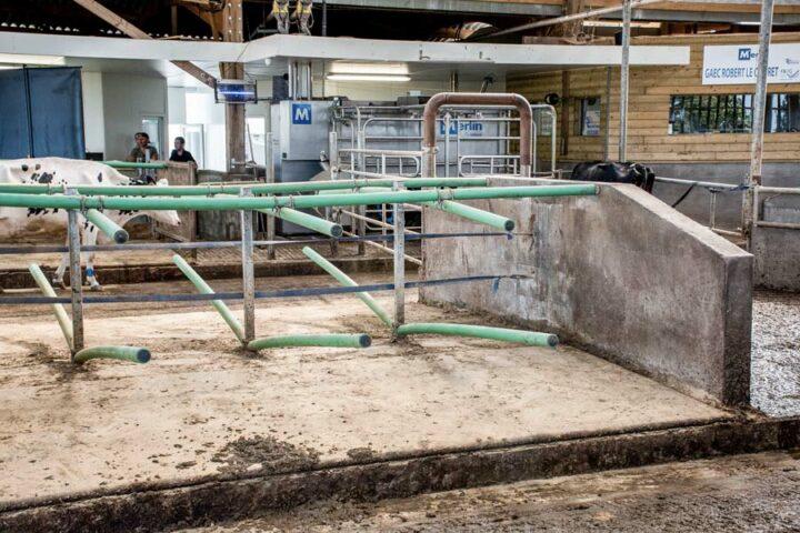 L'éleveur a opté pour un système de logettes souples en faveur du confort des animaux.
