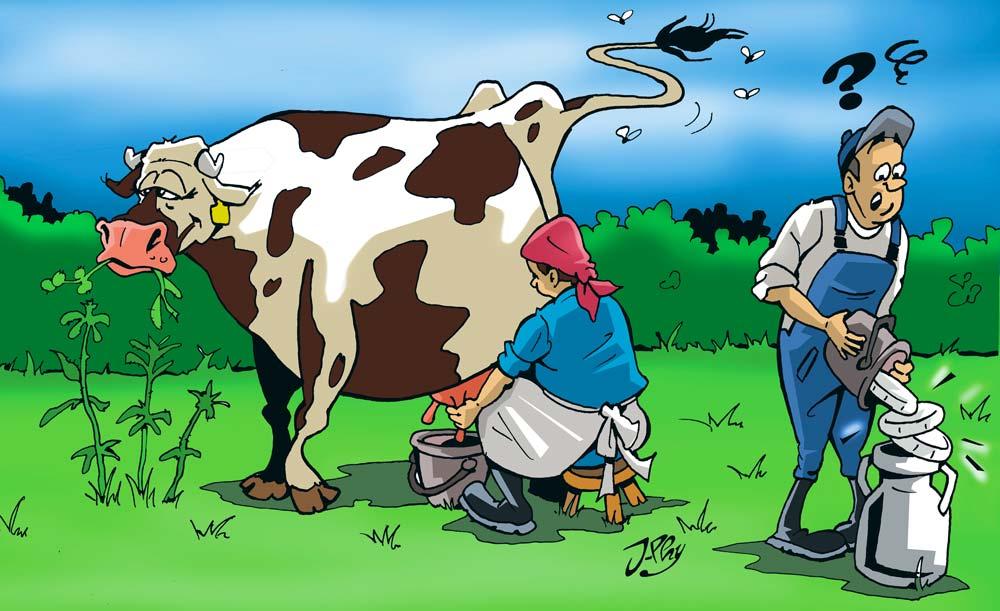 amour-vache