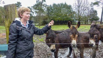 Photo of Raconte-moi une histoire… d'âne