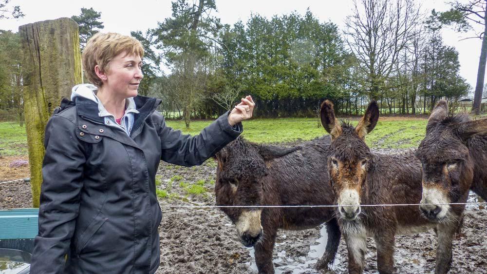 Ève Guyot et quelque-uns de ses amis les ânes.