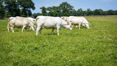 Photo of Les ateliers allaitant et laitier se complètent