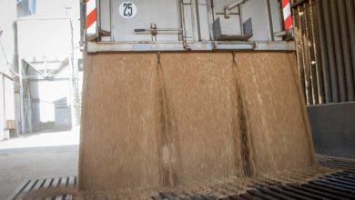 Photo of Des céréales bien ventilées pour conserver la qualité des grains