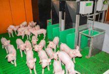 dossier-porc