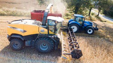 Photo of Du blé ensilé pour les laitières