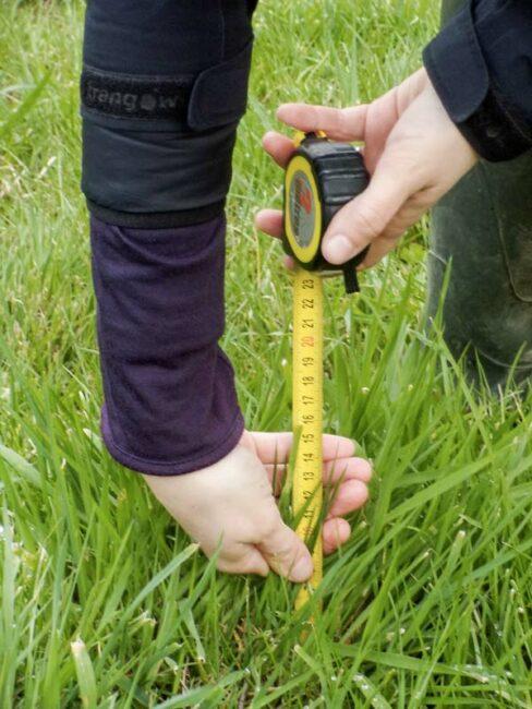 Attendre 18-20 cm de pousse d'herbe pour entrer dans les paddocks afin d'éviter de pénaliser le rendement des prairies.