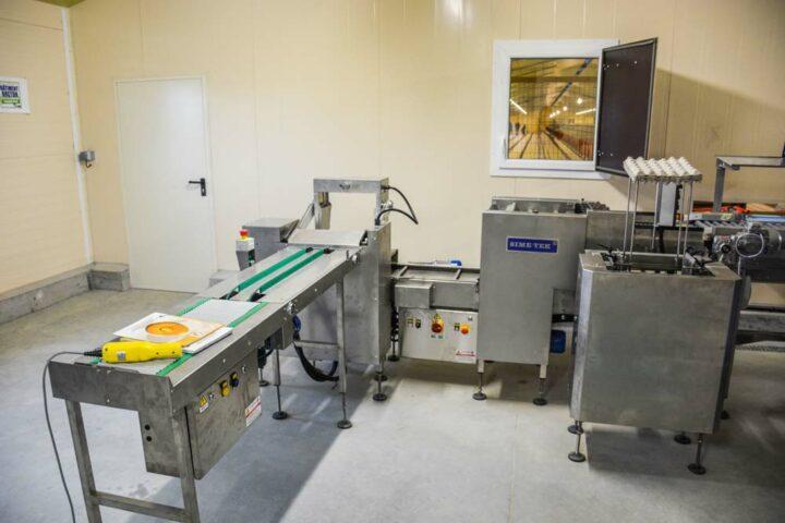 La salle de conditionnement de 200 m2 est équipée d'une table de tri, d'une emballeuse d'une capacité de 20 000 œufs/heure, d'un empilleur avec accumulation de 6 piles et d'une table élévatrice