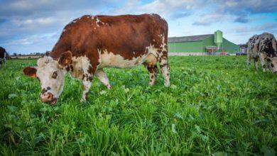Photo of Le revenu des exploitations laitières s'améliore mais la situation reste précaire