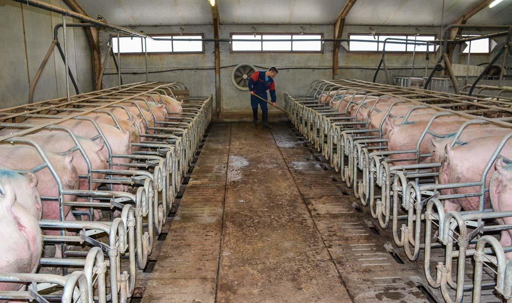 Le recrutement et la fidélisation des salariés sont déjà des enjeux forts pour la filière porcine. Les difficultés pourraient s'accentuer.