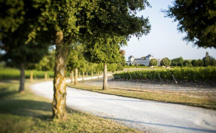 Débutés en 2013, les grands travaux arrivent à leur terme. À compter de janvier prochain, le domaine ouvrira ses portes aux amateurs de vin.