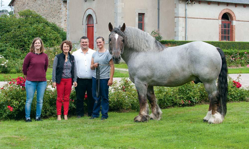 Lénaick Déniel (Société départementale d'agriculture), Patrice Ecot, Pascal Cousin et Lucie Marin (inséminatrice échographe à l'IFCE) accompagnent Ust Ar Mor, un étalon de 10 ans à la robe aubère.