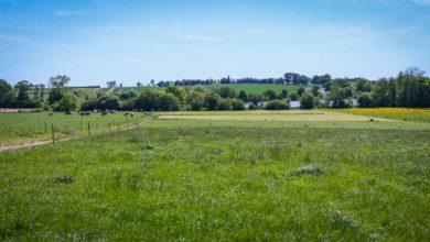 Photo of L'accessibilité à l'herbe, une notion propre à chaque éleveur
