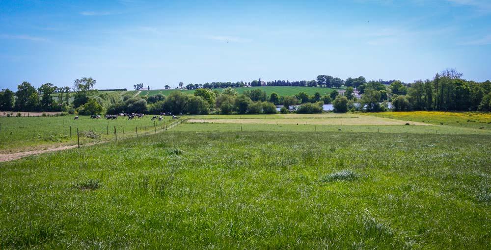 Des parcelles jusqu'alors destinées aux céréales de l'autre côté de la route ont été implantées en prairies.