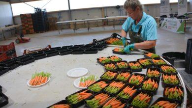 Photo of Un grand bâtiment pour des mini-légumes